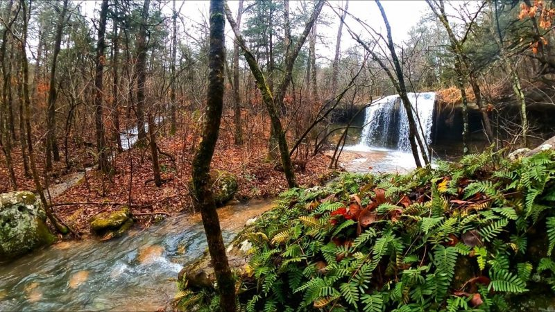Madison County Wildlife Management Area – Arkansas