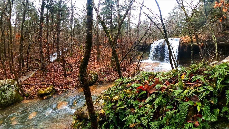 Madison County Wildlife Management Area – Arkansas