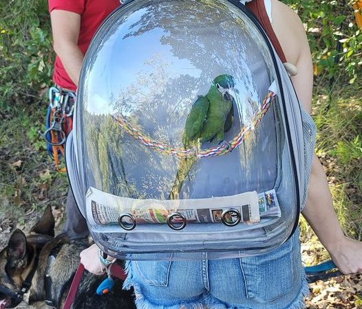 She is out hiking with three dogs and a parrot.