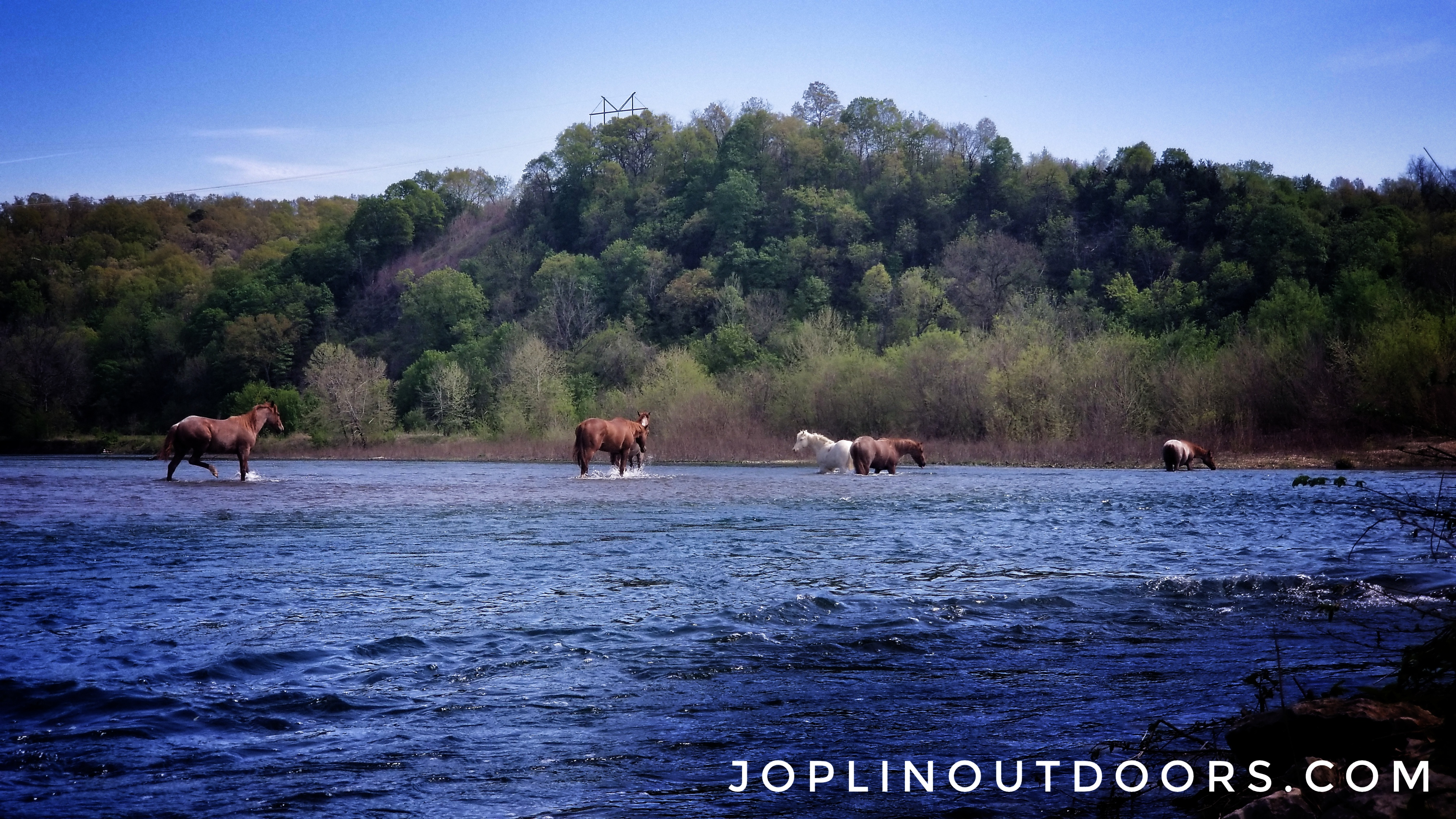 Horses on the Elk River [ HD Video]