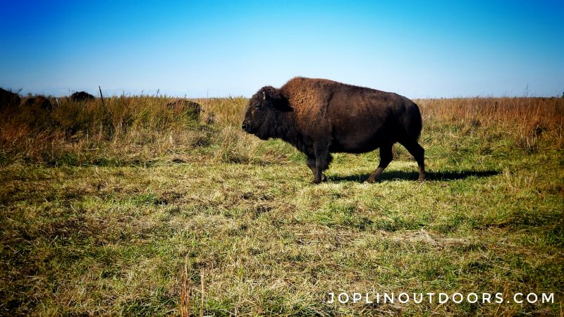 Bison Hike – Prairie State Park – February 1st, 2020 [ Event ]