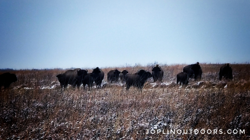 Winter Bison Hike – January 2020 [ Gallery ]