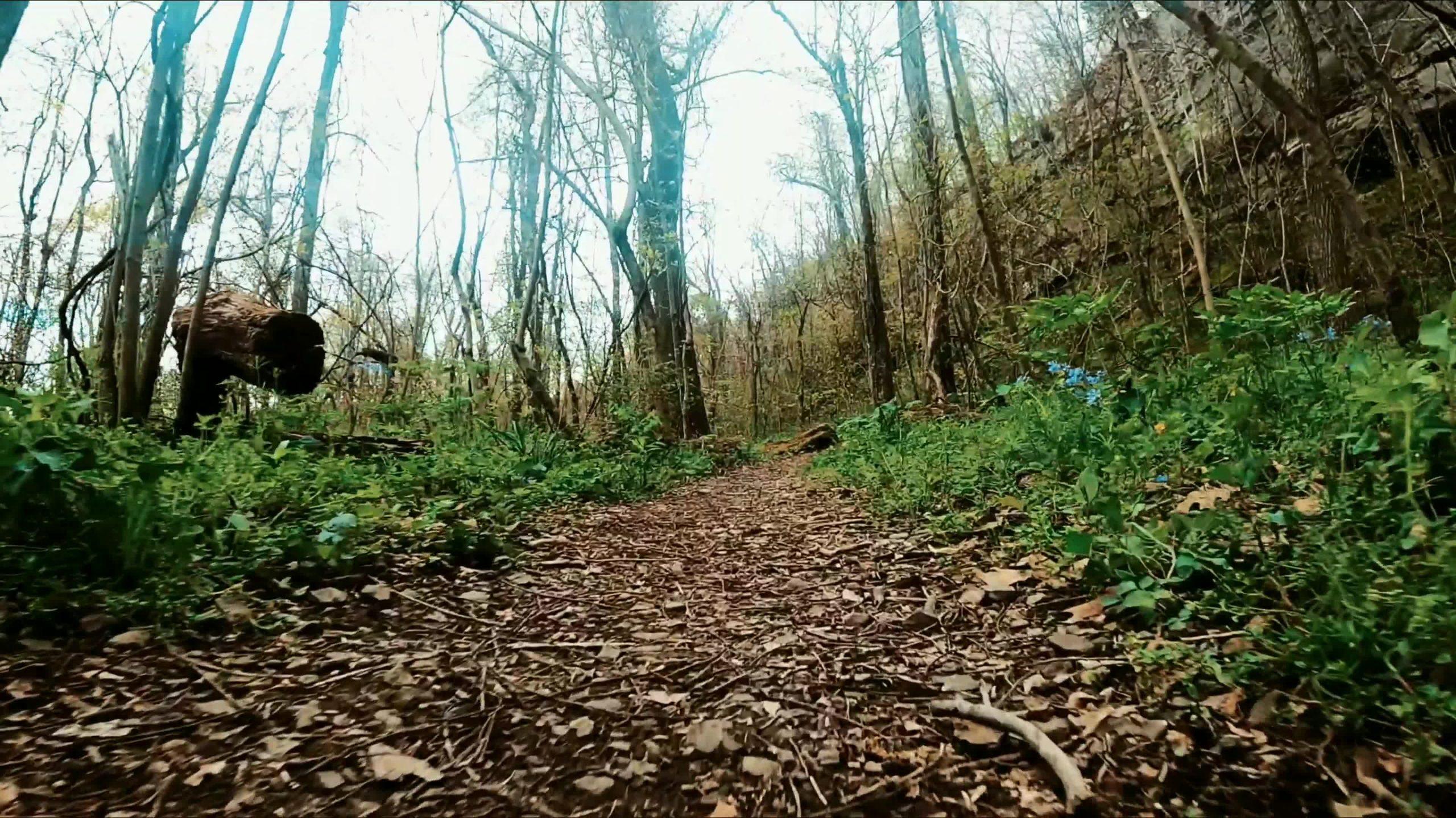 Walk in The Woods – Arkansas [ April, 2021 ]