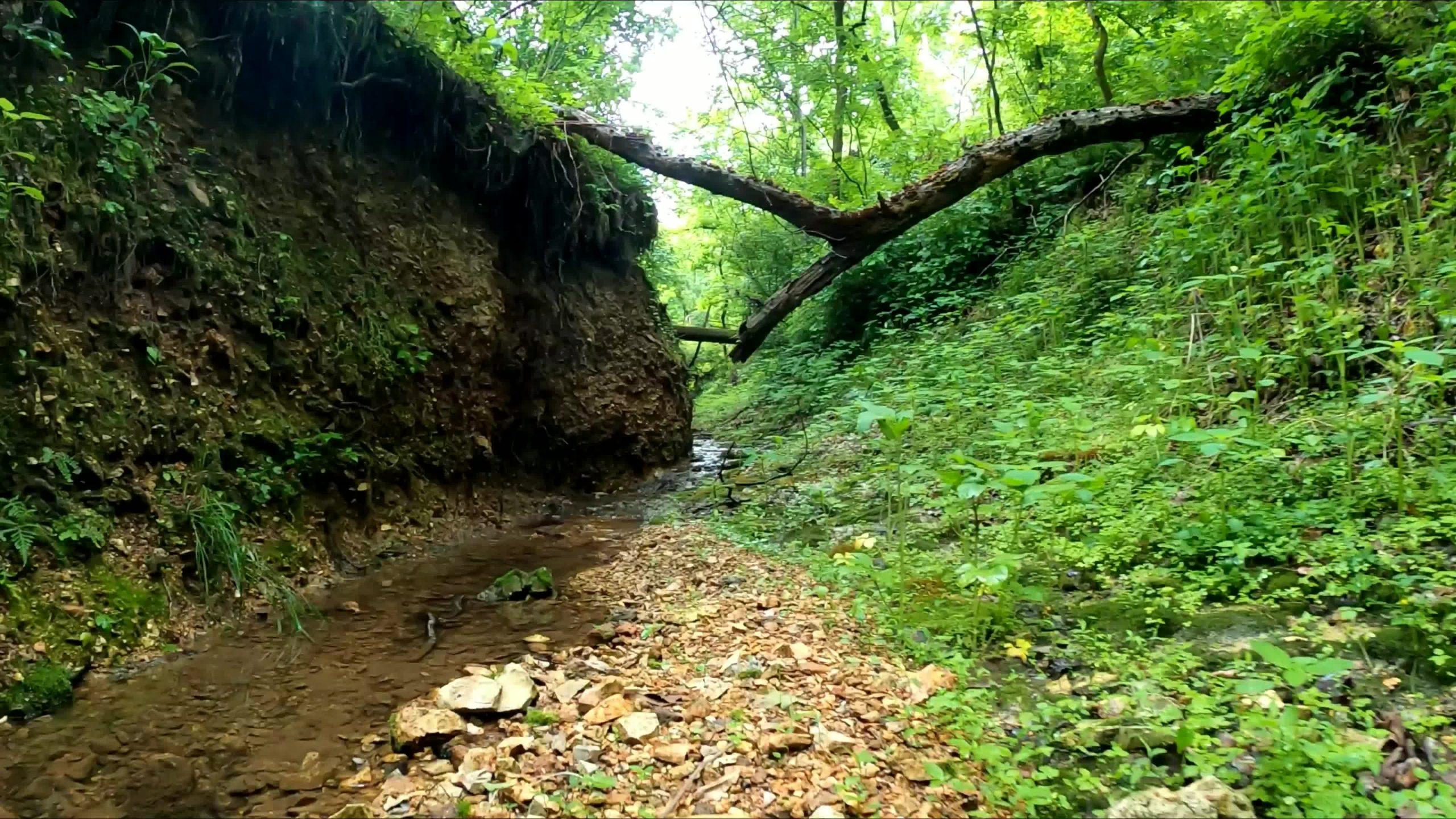 Hidden Creek in the Ozarks
